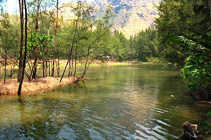 creek winding its way among a forest of evergreen tress, Anawangin Cove, San Antonio, Zambales