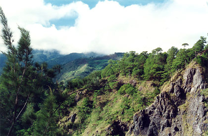 pine trees on mountain slopes along Kennon Road leading to Baguio City