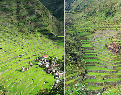 rice terraces in Batad, Banaue, Ifugao