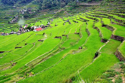 view of the Batad rice terraces from up close with the village at bottom left