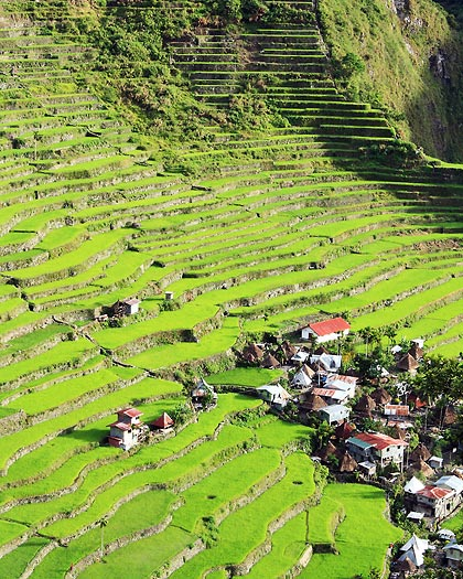view of the Batad Rice Terraces from Simon's Inn just after sunrise