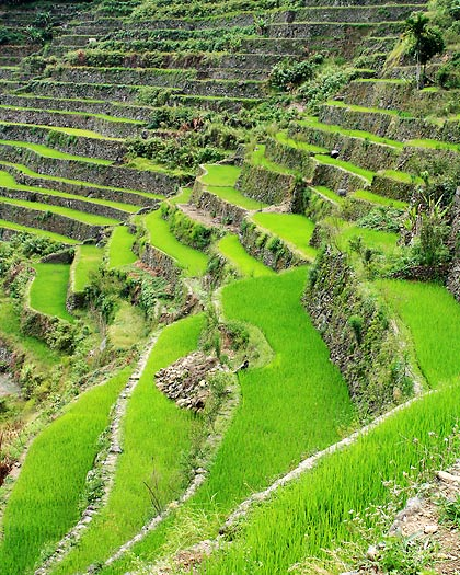 closer view of the Batad Rice Terraces during hike