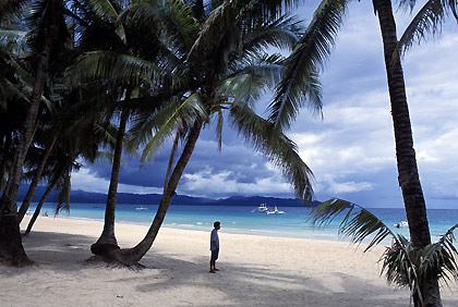 coconut trees along White Beach, Boracay